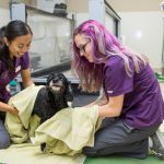 Canine Rehab Drying Off Walnut Creek
