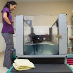 Canine Rehab Tank Walnut Creek